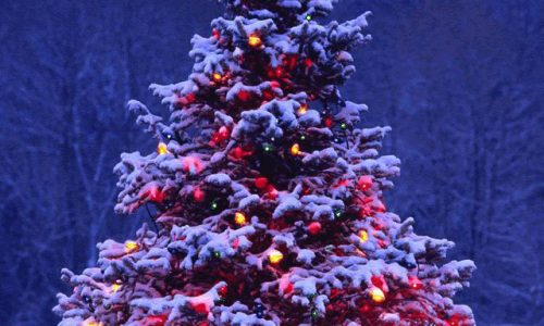 Tutorial: Come scegliere l'Albero di Natale